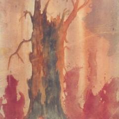 drevesa1